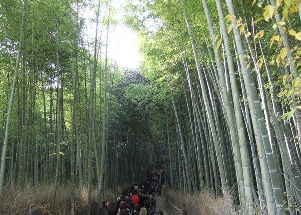 竹林の道.jpg